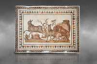 Picture of a Roman mosaics design depicting a lion attacking two onagers or Asiatic wild ass, from the ancient Roman city of Thysdrus. 3rd century AD. El Djem Archaeological Museum, El Djem, Tunisia. Against a grey background