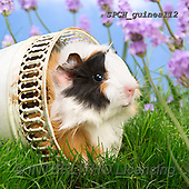 Xavier, ANIMALS, REALISTISCHE TIERE, ANIMALES REALISTICOS, photos+++++,SPCHGUINEA112,#A#, EVERYDAY ,funny