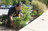 Miguel Silverio plants a marigold flower Tuesday, September 15, 2020, in one of the flower beds near the parking area at the Lake Springdale Trailhead in Springdale. Silverio said he and his children enjoy coming to the park and decided that planting the the marigolds through the summer would show their appreciation for the park and is a good learning opportunity for his children. Check out nwaonline.com/200916Daily/ and nwadg.com/photos for a photo gallery.<br /> (NWA Democrat-Gazette/David Gottschalk)