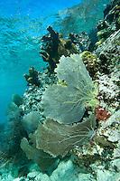Trunk Bay Underwater  Snorkel Trail St John.Virgin Islands National Park