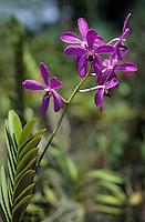 Asie/Malaisie/Kuala Lumpur: Jardin des orchidées