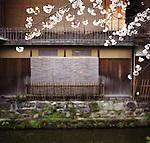 Cherry blossom and traditional Japanese houses along the river Shirakawa in Kyoto.<br /> <br /> Fleurs de cerisier et maisons japonaises traditionnelles le long de la rivière Shirakawa à Kyoto.