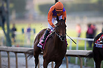 ARCADIA, CA - NOV 04: Beholder #8, ridden by Gary Stevens, after winning the Longines Breeders' Cup Distaff at Santa Anita Park on November 4, 2016 in Arcadia, California. (Photo by Kaz Ishida/Eclipse Sportswire/Breeders Cup)