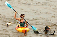 Swimming Labrador retriever dogs surround a woman and boy as they kayak in the Chesapeake Bay in Anne Arundel County, Maryland.