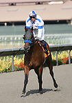 01 August 2009: Sticky Candy (2yo C by Candy Ride) at Del Mar Race Track, Del Mar, CA