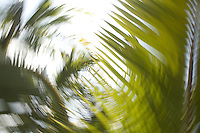 Abstract image of palm fronds spinning in a circular motion
