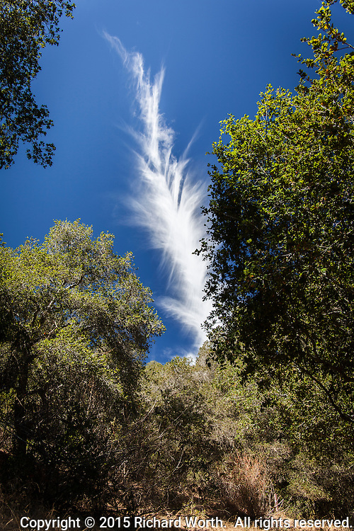 Moments after spotting a bird's feather on the ground, this cloud image of a feather in the sky appeared between the trees on a trail at Cull Canyon regional park in Castro Vallly, CA