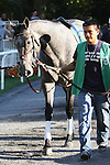 09 25 2010:12- 1 shot My Jen surprises in the 17th running of the Grade II Gallant Bloom at 6 1/2 furlongs, for 3-year old & up, fillies & mares, Belmont Park, Elmont, NY. Trainer Eddie Kenneally.  Owners Windmill Manor Farms.