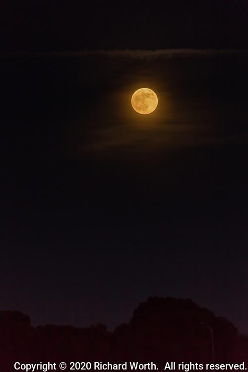 The Full Beaver Moon rises over trees at a golf course adjacent to the San Leandro Marina along San Francisco Bay.
