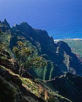 Ohia Tree & Kalalau Valley Cliffs, Na Pali Coast State Park, Kauai, Hawaii, USA.