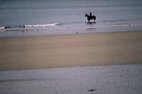 """Europe/France/Bretagne/22/Côtes d'Armor/Plouha: Cheval sur la plage de """"Le Palus"""""""