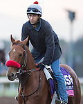 ARCADIA, CA - OCT 31: Madam Dancealot, owned by Nick Cosato and trained by Richard Baltas, exercises in preparation for the Breeders' Cup Juvenile Fillies Turf  at Santa Anita Park on October 31, 2016 in Arcadia, California. (Photo by Douglas DeFelice/Eclipse Sportswire/Breeders Cup)