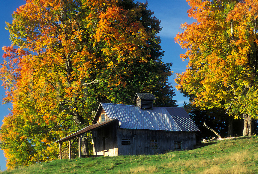 fall, sugarhouse, Peacham, VT, Vermont, A sugarhouse surrounded by colorful fall foliage in the autumn.