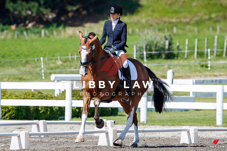 NZL-Amy Arnott rides Rata Mill Jefferson. Final-1st. Livamol Amateur Elementary Eye Opener -Test 3A. 2020 NZL-Bates Saddles NZ Dressage Championships. NEC Taupo. Thursday 19 November 2020. Copyright Photo: Libby Law Photography