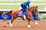 DEL MAR, CA - OCTOBER 28: Wuheida, owned by Godolphin Stable Lessee and trained by Charlie Appleby, exercises in preparation for Breeders' Cup Filly & Mare Turf at Del Mar Thoroughbred Club on October 28, 2017 in Del Mar, California. (Photo by Alex Evers/Eclipse Sportswire/Breeders Cup)