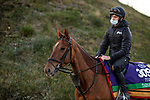 November 2, 2020: Tarnawa, trained by trainer Dermot K. Weld, exercises in preparation for the Breeders' Cup Turf at Keeneland Racetrack in Lexington, Kentucky on November 2, 2020. Alex Evers/Eclipse Sportswire/Breeders Cup