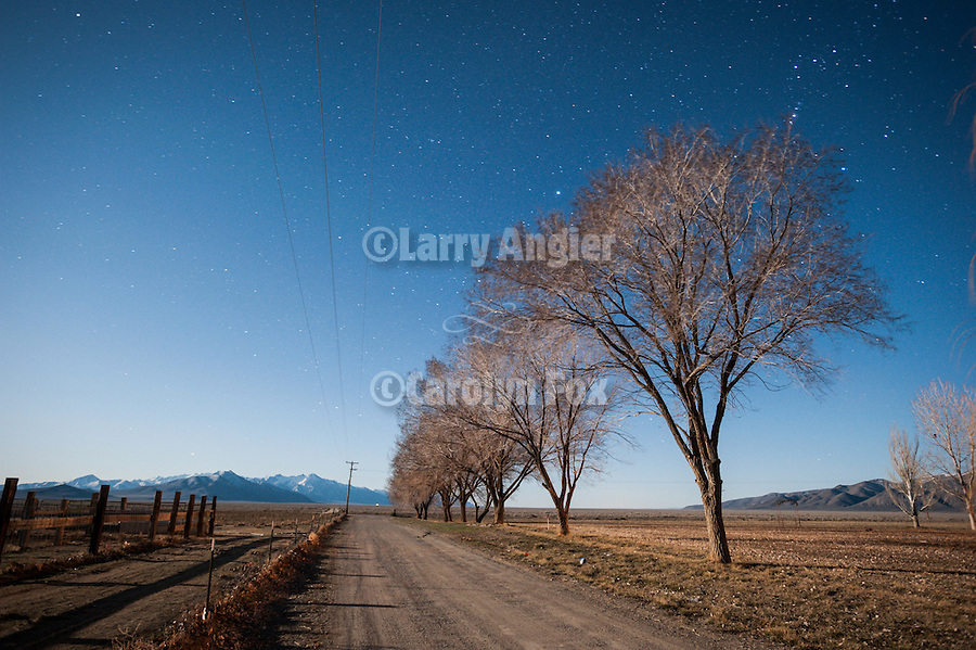 Bare elm trees along the driveway at the Dufurrena Ranch during a full moon with starry sky