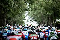 peloton   <br /> <br /> GP Marcel Kint 2019 (BEL)<br /> One Day Race: Kortrijk – Zwevegem 188.10km. (UCI 1.1)<br /> Bingoal Cycling Cup 2019