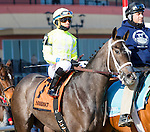 OZONE PARK, NY - JANUARY 30:  Sunny Ridge with Manual Franco on Withers Stakes Day at Aqueduct Race Track in Ozone Park, New York on January 30, 2016. (Photo by Sue Kawczynski)