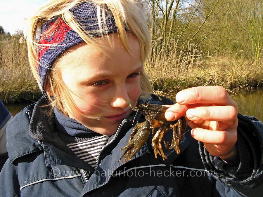 Junge hat einen Flußkrebs, Flusskrebs im Bach gefangen und betrachtet diesen