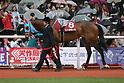 Horse Racing : Sankeisports Hai Hanshin Hinba Stakes at Hanshin Racecourse
