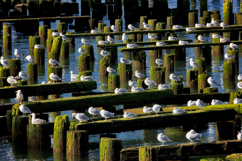 Seaguls resting on old building structure. Astoria, Oregon