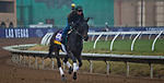 DEL MAR, CA - NOVEMBER 31: Elate, owned by Claiborne Farm & Adele Dilschneider and trained by William I. Mott, exercises in preparation for Longines Breeders' Cup Distaff at Del Mar Thoroughbred Club on October 31, 2017 in Del Mar, California. (Photo by Jesse Caris/Eclipse Sportswire/Breeders Cup)