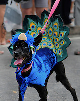 A dog dressed in a carnival costume, as a peacock, takes part in the animals carnival, Copacabana, Brazil, February 3, 2013. (Austral Foto/Renzo Gostoli)