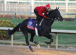 Stacelita , trained by Chad Brown and to be ridden by Ramon Dominguez , exercises in preparation for the 2011 Breeders' Cup at Churchill Downs on  October 31, 2011.