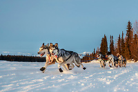 #6 Ramey Smith rides into the Finger Lake checkpoint in the morning on March 4th during the 2019 Iditarod.<br /> <br /> Photo by Jeff Schultz/  (C) 2019  ALL RIGHTS RESERVED