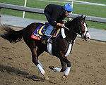Next Question, trained by Michael Trombetta, exercises in preparation for the upcoming Breeders Cup at Santa Anita Park on November 1, 2012.