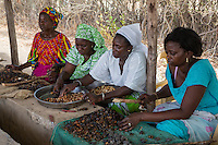 Women's Cooperative Processing Cashew Nuts, Fatick,  Senegal.  Many nuts have been dried excessively, burnt, or broken into small pieces, all of which reduce the commercial value.