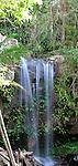 Curtis Falls, Tamborine Mountain National Park, Queensland