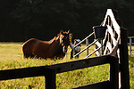 A horse is attended to at Springdale farm, eastern Pennsylvania