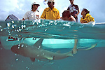Rick Kirkham Holding Tagging Lemon Shark With Sam & Aya Gruber, Jean & Jon