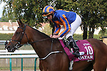 October 02, 2016, Chantilly, FRANCE - Found with Ryan-Lee Moore up at the Qatar Prix de'l Arc de Triomphe (Gr. I) at  Chantilly Race Course  [Copyright (c) Sandra Scherning/Eclipse Sportswire)