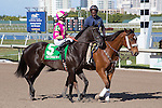 February 21, 2015: Skipalute on post parade before the start of the Davona Dale Stakes(G2). Gulfstream Park, Hallandale Beach (FL). Arron Haggart/ESW/CSM