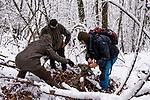 Balkan Lynx (Lynx lynx <br /> balcanicus) biologists, Lilli Middelhoff, Eko Veapi, and Dime Melovski, checking female Western Roe Deer (Capreolus capreolus) kill made by female in winter, Mavrovo National Park, North Macedonia