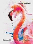 Alfredo, REALISTIC ANIMALS, REALISTISCHE TIERE, ANIMALES REALISTICOS, paintings+++++,BRTOXX10483,#a#, EVERYDAY,flamingo,flamingos