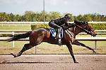 #86.Fasig-Tipton Florida Sale,Under Tack Show. Palm Meadows Florida 03-23-2012