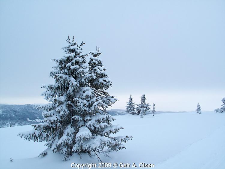 Venabygdsfjellet i februar 2009