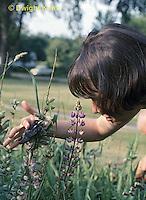 BA17-008z   Barn Swallow - girl watching young - Hirundo rustica