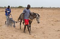 Senegal, Millet Cultivation