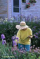 HB05-159x   English Cottage Garden - picking flowers - bearded iris - Iris spp.