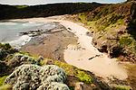 Image Ref: CA988<br /> Location: Bushrangers Bay Track<br /> Date of Shot: 28.09.19