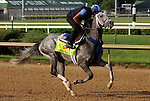 LOUISVILLE, KY - MAY 02: Kentucky Derby hopeful Mohaymen (Tapit x Justwhistledixie, by Dixie Union) gallops playfully on track at Churchill Downs, Louisville KY, with exercise rider Miguel Jaime. Owner Shadwell Stable, trainer Kieran P. McLaughlin. (Photo by Mary M. Meek/Eclipse Sportswire/Getty Images)