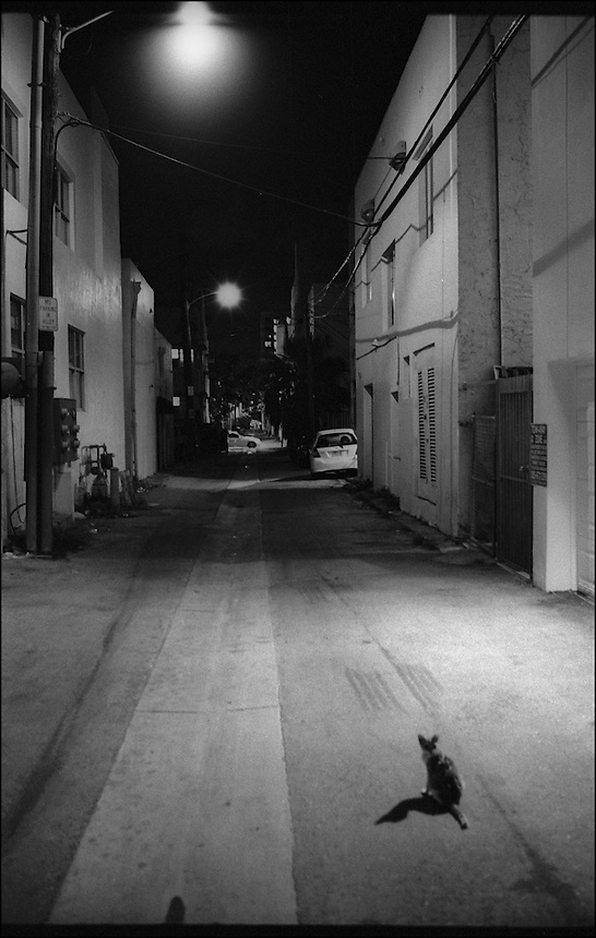 "In the alley<br /> From ""Miami Nights"" series<br /> Miami Beach, May 2011"