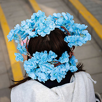Thousands of people descend on Beijing's parks in the spring to witness the ever popular annual cherry blossoms. Wreaths of flowers adorn the heads of those gathered under the trees, as they try to catch sight of the ephemeral blooms and the inevitable falling of the leaves. Wreaths of flowers worn on the head is a tradition that dates back over 2000 years in human history. Early uses date back to ancient Greece and Rome when they were used at celebrations, often indicating a person's heirarchical status in society. Are these modern wreaths a sign of reverence for nature, or simply a prop for the perfect selfie? Cherry blossom blooms around the world have been appearing earlier than expected and in neighbouring Japan they have witnessed the earliest bloom in 1,200 years. This has lead scientists to speculate a warming climate is beginning to significantly change the timings in the cherry blossom's life cycle. Early blooms may be a new 'canary in the coal mine' for our rapidly changing climate. - APRIL, 2021