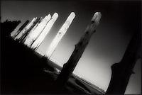 Old pier pilons<br />