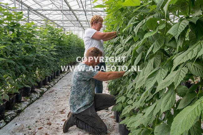 't Loo 060821 - Foto Ruben Meijerink / APA FOTO<br /> Maatschap Wilting-Arentz, een groente- en fruitkwekerij in Loo. <br /> Frank en Ellen Wilting in actie bij de frambozen planten